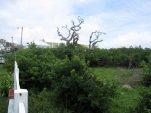 Crisson Real Estate Property Search in HM 14 - Mission Lane Lot A, Pembroke, Bermuda